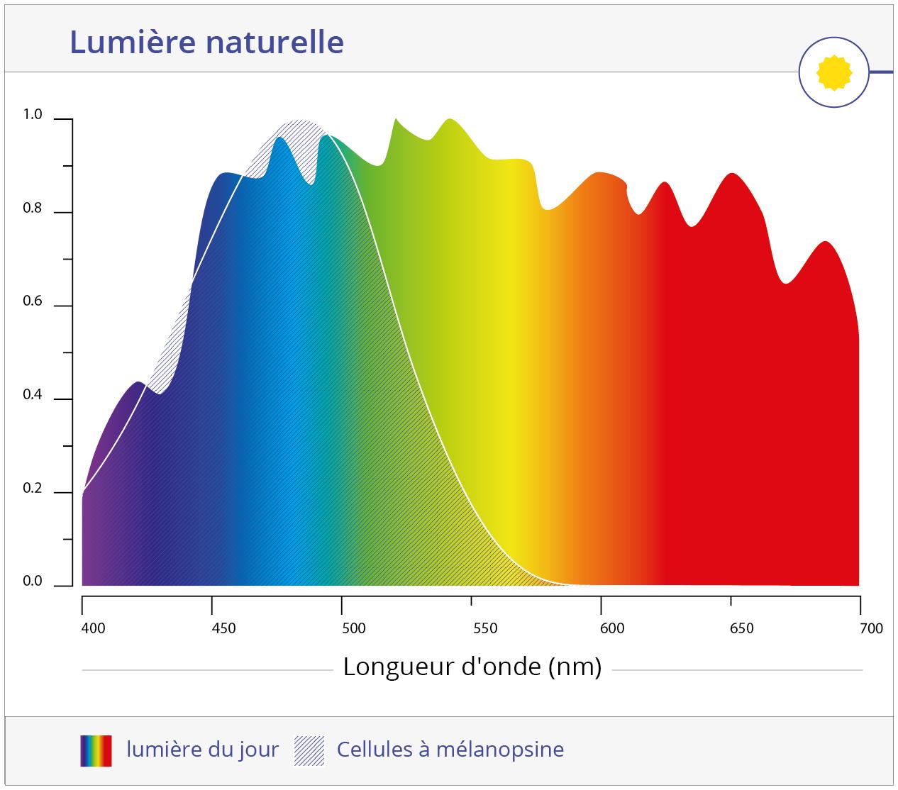 Cellule mélanopsine et lumière du jour