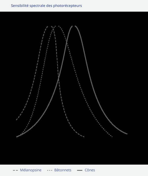 Sensibilite-spectrale cones batonnets mélanopsine