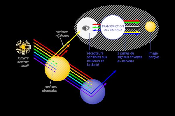 couleur-mecanisme